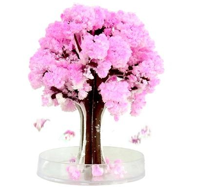 New Japanese Magic Sakura Tree - Large