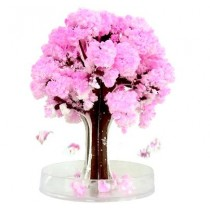 New Japanese Magic Sakura Tree - Small